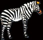 Zebra pin