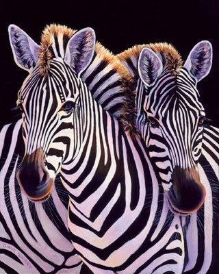Zebras are the symbols of rare diseases in the carcinoid and neuroendocrine cancer community