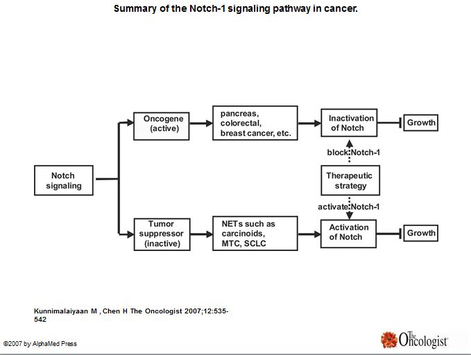 Notch 1 Signaling in Neuroendocrine Tumors