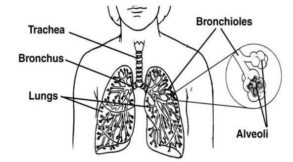 Lung Carcinoid Video Released by the Carcinoid Cancer Foundation