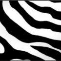 CACNETS logo square